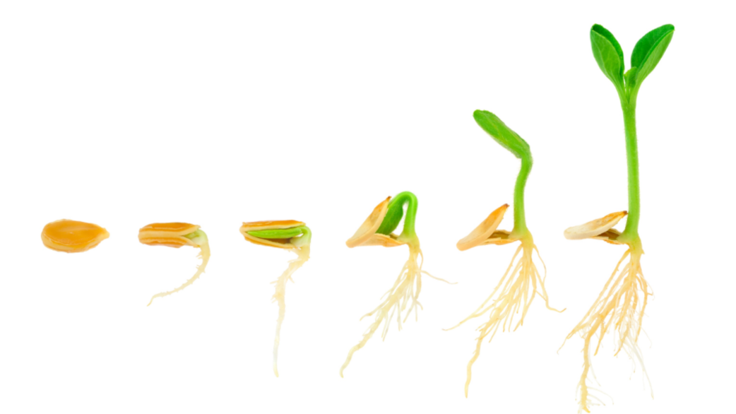 Header_sprouts